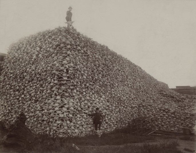 Bison_skull_pile_edit-Wikipedia Commons